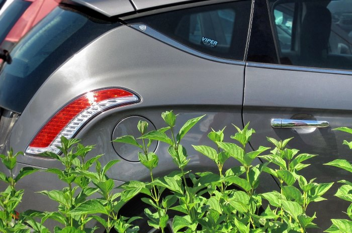 Close-up of car rear with plants nearby
