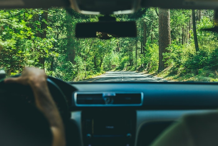 windscreen view driving through trees