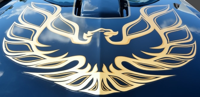 Gold eagle linework decal on a blue car bonnet