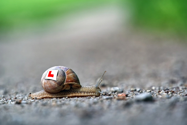 Gray and brown snail moving across gravel