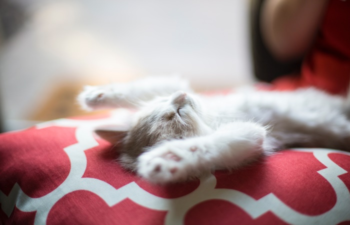 Kitten sleeping with paws up