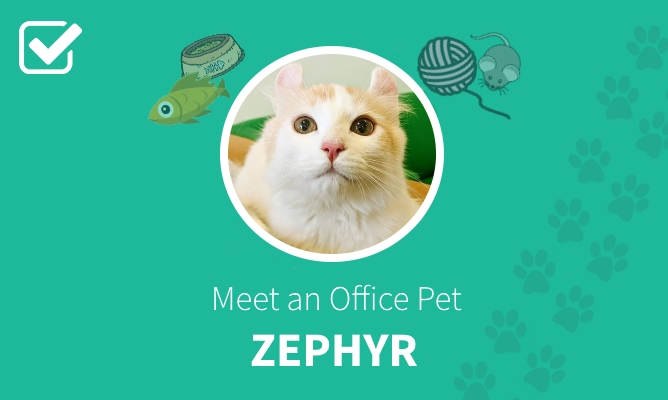 Meet an Office Pet header with photo of Zephyr