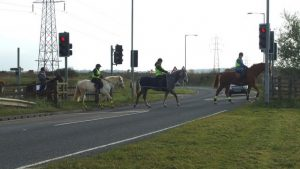 Pegasus road crossing being used by horses.