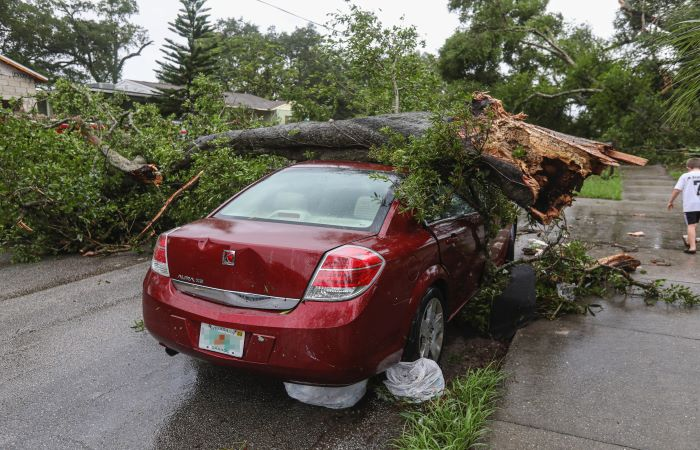 Red car parked on road with fallen tree on top of it