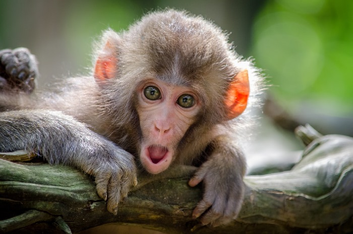 Monkey holding onto branch looking shocked