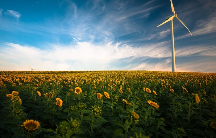 Wind turbine in field of sunflowers